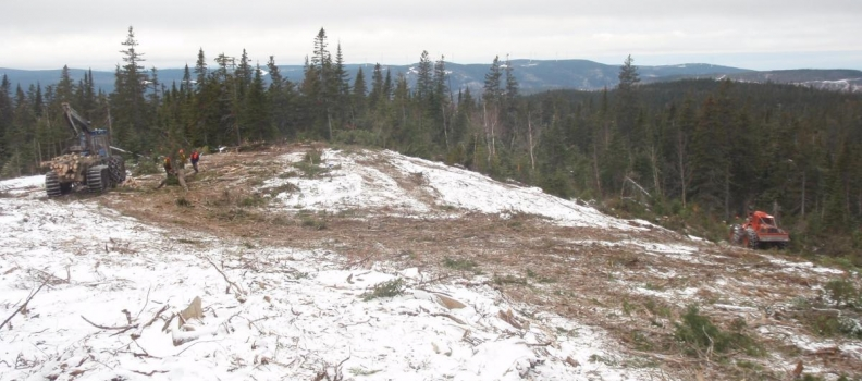Tree clearing activities begin and moose non-hunting zone